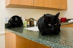 Oficina del veterinario Foto de archivo libre de regalías