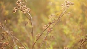Oficina en el sol del otoño, cacerola metrajes