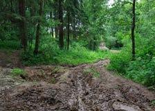 Oframkomlig skogväg av gyttja och lera Arkivfoton