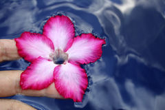 Ofrecimiento de la flor Imagenes de archivo