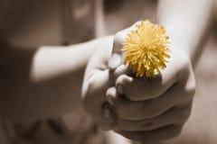 Ofrecimiento de paz Imagen de archivo