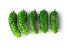 ogórek świeżej green Fotografia Royalty Free