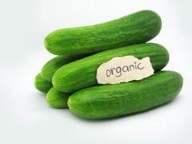 ogórki organicznie Obraz Stock