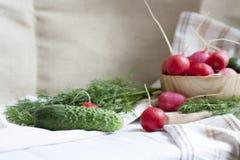 Ogórki, rzodkwie i ziele, Zdjęcia Stock