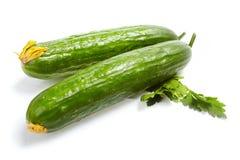 ogórkowi świezi warzywa Obraz Stock