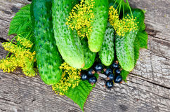 Ogórkowi koperów liście, jagoda na desce i Obrazy Stock
