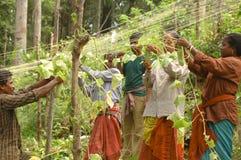 Ogórkowy uprawia ziemię Andamans Zdjęcie Stock