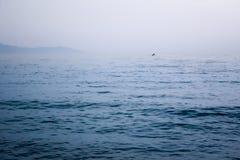 Ogłoszenia towarzyskiego dżetowy watercraft na horyzoncie w morzu obraz royalty free