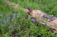 Og en bosque de la primavera imagenes de archivo