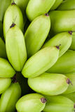 Oganic gröna rå äggbananer på för Pisang Mas Banana för vit bakgrund isolerad sund mat frukt royaltyfri illustrationer