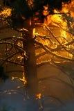ogarniający płomieni w pełni odosobniony drzewo Obrazy Royalty Free
