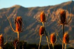 Ogden Utah Grassshopper auf Anlagen Lizenzfreies Stockbild