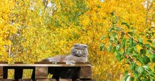 ogen de kleur van de herfst Stock Afbeeldingen