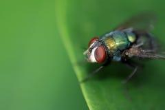 Ogen van een vlieg, extreme close-up Stock Foto