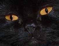 Ogen van een zwarte kat stock afbeeldingen