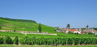 Oger,Champagne,France Royalty Free Stock Image