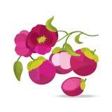 Oggetti di vettore del fiore e del mangostano illustrazione di stock