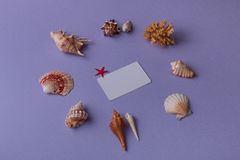 Oggetti marini con la carta di bisiness Fotografia Stock Libera da Diritti