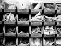 Oggetti medici negli shelfs Immagine Stock