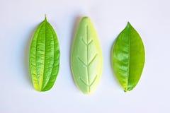 Oggetti originali e falsi (foglie) accanto a ogni altro Fotografia Stock