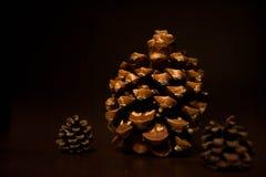 Oggetto del pino Cones Immagini Stock