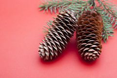 Oggetto del pino Cones Fotografie Stock