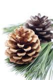 Oggetto del pino Cones Fotografie Stock Libere da Diritti