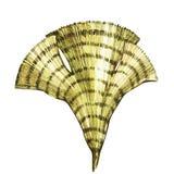 Oggetto di vita di mare dell'alga isolato su fondo bianco Illustrazione dipinta disegnata a mano dell'acquerello Acquerello subac illustrazione vettoriale
