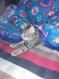 Oggi gatto fotografie stock