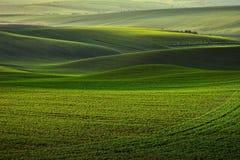 Oggi in Moravia Fotografia Stock