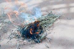Ogień gałązki Obrazy Royalty Free