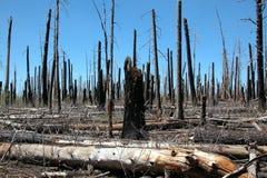 ogień niedbałe las Obrazy Royalty Free