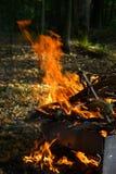 Ogień pali w drewnach obrazy stock