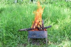Ogień w będącym ubranym brązowniku na zielonych rośliien backgroun Zakończenie obrazy stock