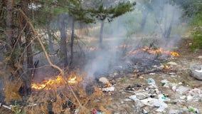 Ogień w drewnach zbiory wideo
