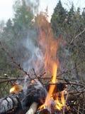 Ogień w drewnach Zdjęcia Stock