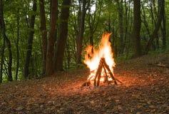 Ogień w jesień lesie Zdjęcia Royalty Free