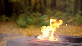 Ogień w jesieni lasowym niebezpieczeństwie pożar lasu - dym i płomień grill zbiory wideo