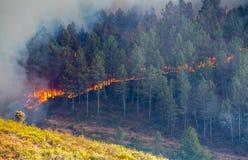 Ogień w lesie zdjęcia stock