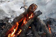 Ogień w lesie, płonącym drewnie i gałąź, Fotografia Stock