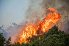 Ogień w sosnowym lesie w Kassandra, zdjęcie stock
