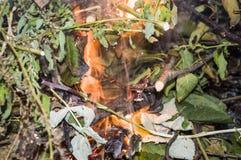 Ogień w trawie, gałąź fotografia fotografia royalty free