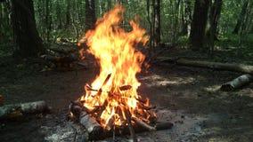 Ogień drewno Obraz Stock