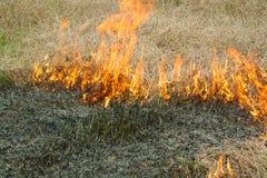 Ogień na naturze - oparzenie trawa w polu Fotografia Stock