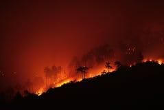 Ogień przez drzewa Zdjęcia Royalty Free