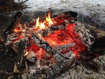 Ogień w drewnach Obraz Stock