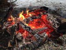 Ogień w drewnach Obraz Royalty Free