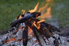 Ogień w lesie Fotografia Royalty Free