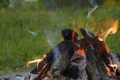 Ogień w lesie Fotografia Stock