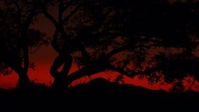 Ogień W niebie Obraz Stock